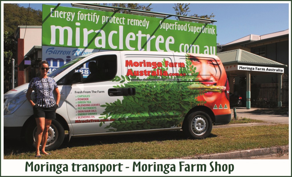 Moringa Australian grown