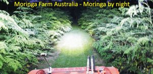 Moringa Farm Australia by Night