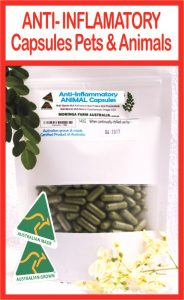 Anti inflammatory CAPSULES Pets Animals