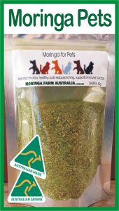 Moringa Pets & Animals